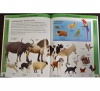 Oxford Children's Welsh - English Visual Dictionary