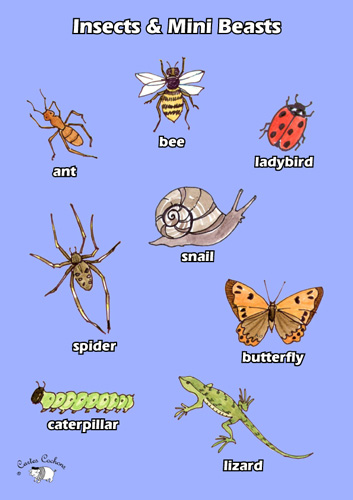 english poster insects amp mini beasts little linguist
