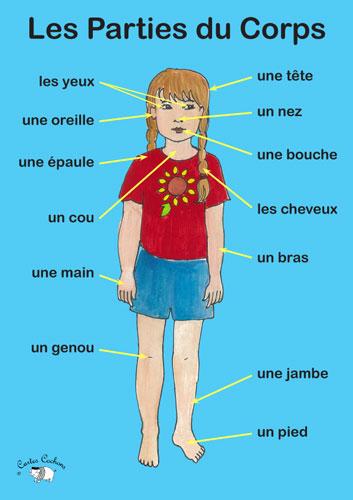 Poster - Les Parties du Corps - Little Linguist