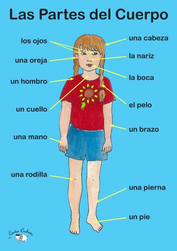 Poster - Las Partes del cuerpo - Little Linguist
