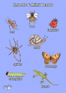 English Poster (A3) - Insects & Mini Beasts
